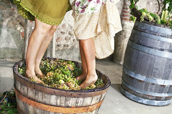 szüreti-hagyományok - szőlő taposás