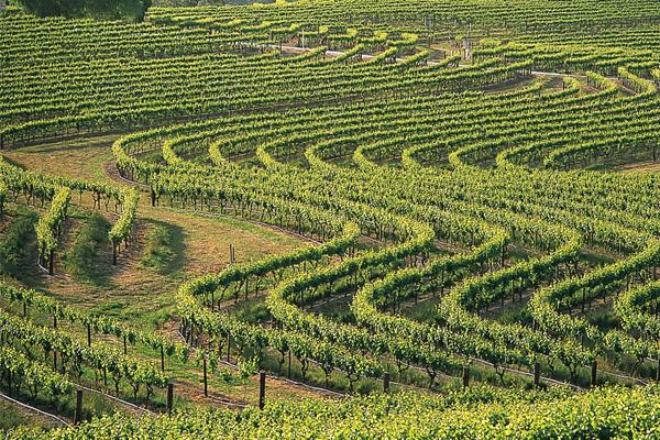 Az ausztrál borokról sem szabad megfeledkezni.