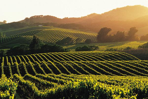 A kaliforniai Napa Valley lankái is kiváló boroknak adnak otthont.